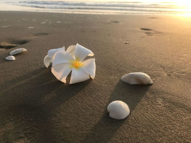 Sunrise on beach Shell Sunrise Beach Sand Shore Nature Beauty In Nature Day No People Sea Close-up Outdoors Summer Water