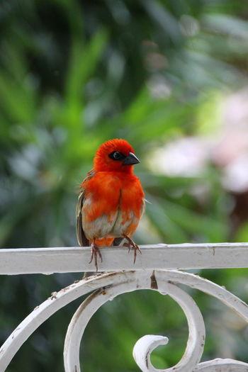 Bird Seychelles