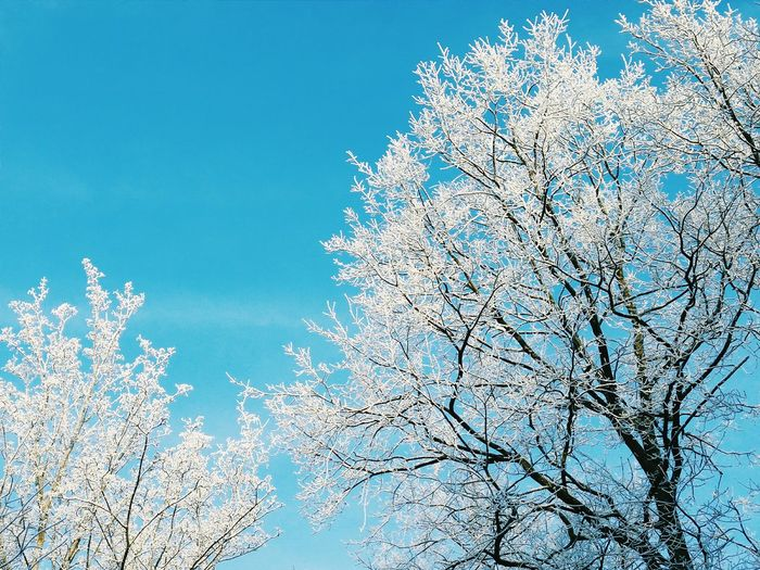 Cold Winter Winter Wonderland Photography First Eyeem Photo Vscocam Trees Sky EyeEm Nature Lover