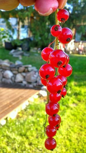 Berries Red