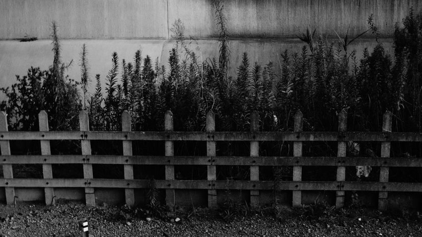 Fence Monochrome Nature No People Plant Safety Security Side By Side