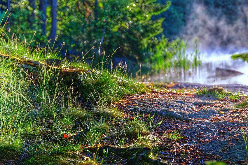 Green Color Sunrise_sunsets_aroundworld Littoisten Järvi Beauty In Nature