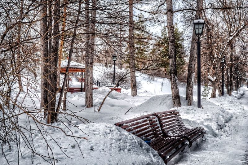 Empty Benches By Bare Trees On Snowcapped Field