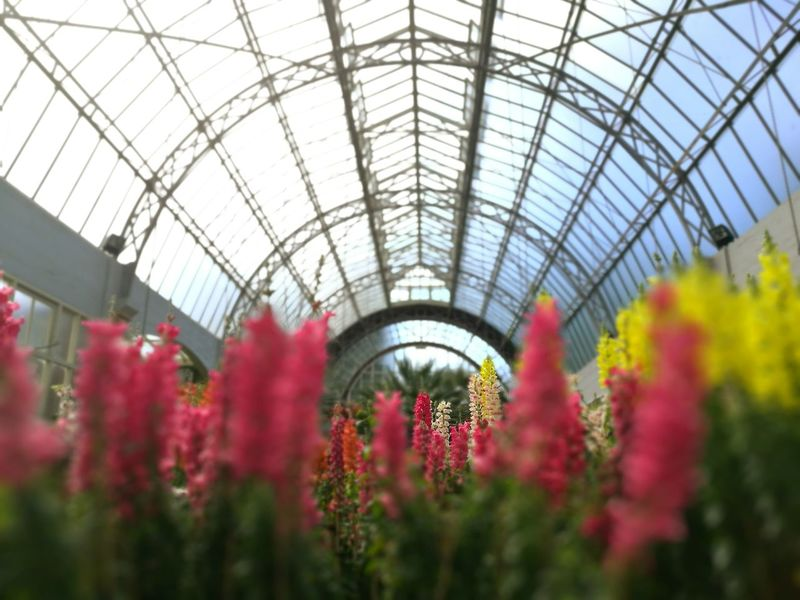 Flower Plant Greenhouse Architecture Spring Beauty In Nature Wintergarden Glasshouse Botanical Sunshine Flower Nature Plant Greenhouse Growth Red Plant Nursery Fragility Beauty In Nature No People Freshness Built Structure Indoors  Ornamental Garden Architecture First Eyeem Photo