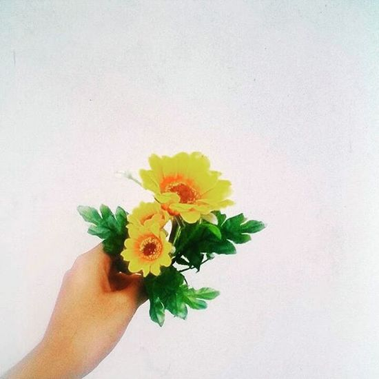 I'd rather have flowers in my hair than diamonds around my neck 🌻🌻🌻 Vscocam Vscogood VSCO