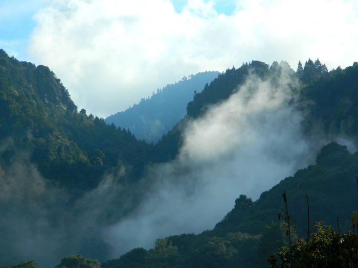 Tree Mountain Forest Send Fog Pinaceae Sky Travel Cloud - Sky Mountain Peak