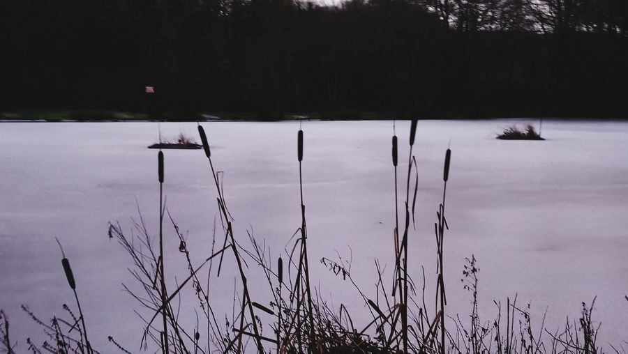 It's grim up north :) EyeEm Best Shots EyeEm Nature Lover Iced Pond Freezing Weather Nature Winter Cold Temperature Lake Outdoors Snow Landscape Tranquility Beauty In Nature
