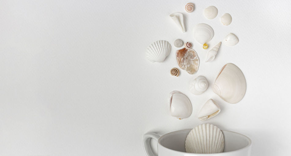 High angle view of shells on white table