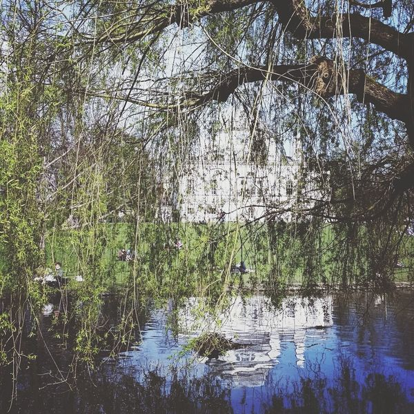 Chiswick House Chiswick Nature On Your Doorstep Nature Trees Summer London Branches Day Out Picnic London Life Home