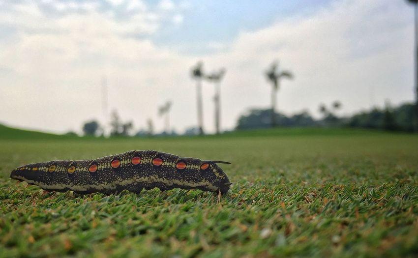 Close-up of caterpillar on grassy field