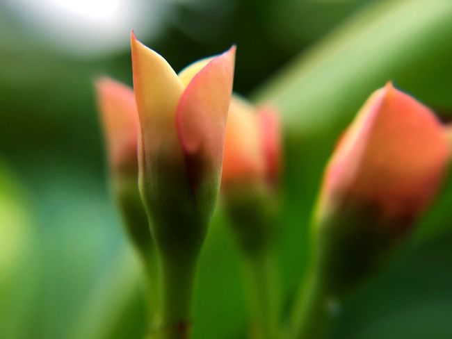 Beauty In Nature Close-up Plant Flower Growth Flowering Plant Vulnerability