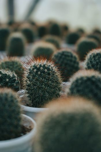 Close-up of cactus in potted plant