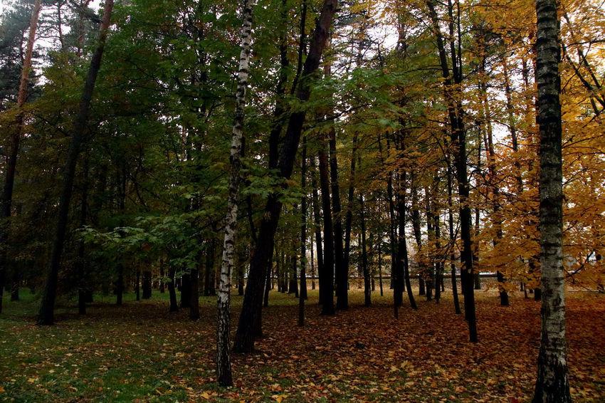 Autumn Autumn Colors Autumn Leaves Belarus Soviet Era Seasons Soviet Soviet Architecture Summer Travel Destinations