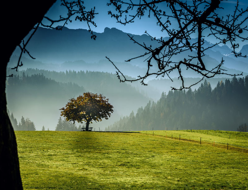 Beauty In Nature Day Field Fog Grass Green Color Growth Landscape Mountain Nature No People Outdoors Romantic Scenics Sky Tranquil Scene Tranquility Tree
