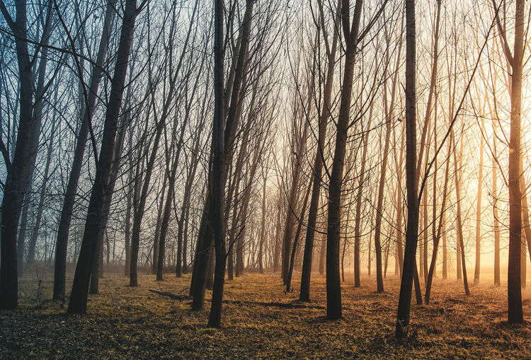 Autumn EyeEm Best Shots EyeEm Nature Lover EyeEmNewHere Light Morning Light Piemonte Tranquility Trees VSCO Wood Beauty In Nature Forest Forest Photography Italy Landscape Light And Shadow Lightning No People Photography Scenics - Nature Shadow Sunrise Vscocam WoodLand