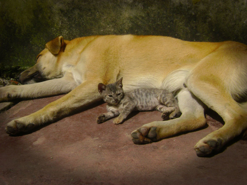 Animals Best Friends Cats And Dogs No People Outdoors Qute Qute Animals Sleepy Time Togetherness