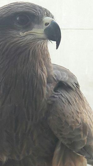 Just came to my window Taking Photos Majestic Eaglepride Karachi Pakistan