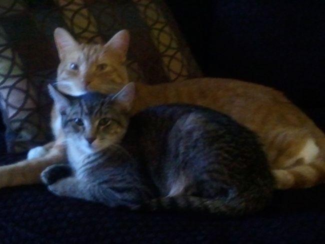 My Peekaboo and Bailey. Such camera hungry kids. All love. 2013. Kittylove Pspauly63