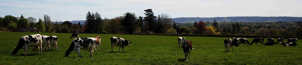 Cattle Cattlescape Day Grass Landscape Landscape_Collection Panorama Sky Tree