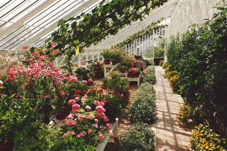 Abundance Arundel Beauty In Nature Blooming Blossom Botany Day Flower Fragility Freshness Garden Grass Green Green Color Greenhouse Growing Growth In Bloom Nature No People Outdoors Plant Summer