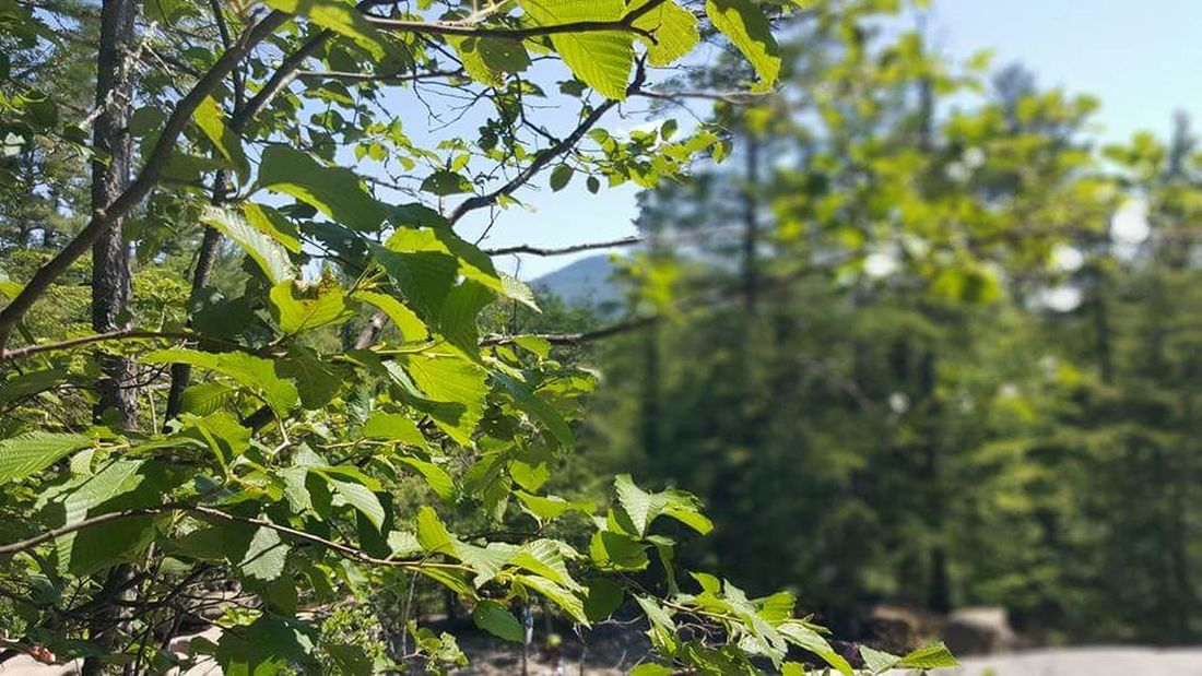 Focus On Foreground Tree Growth Leaf Branch Close-up Nature Plant Scenics Day Green Color Beauty In Nature Green Tranquility Sky Outdoors Tranquil Scene Freshness No People Growing Hello World EyeEm Best Shots Beauty In Nature Check This Out Nature