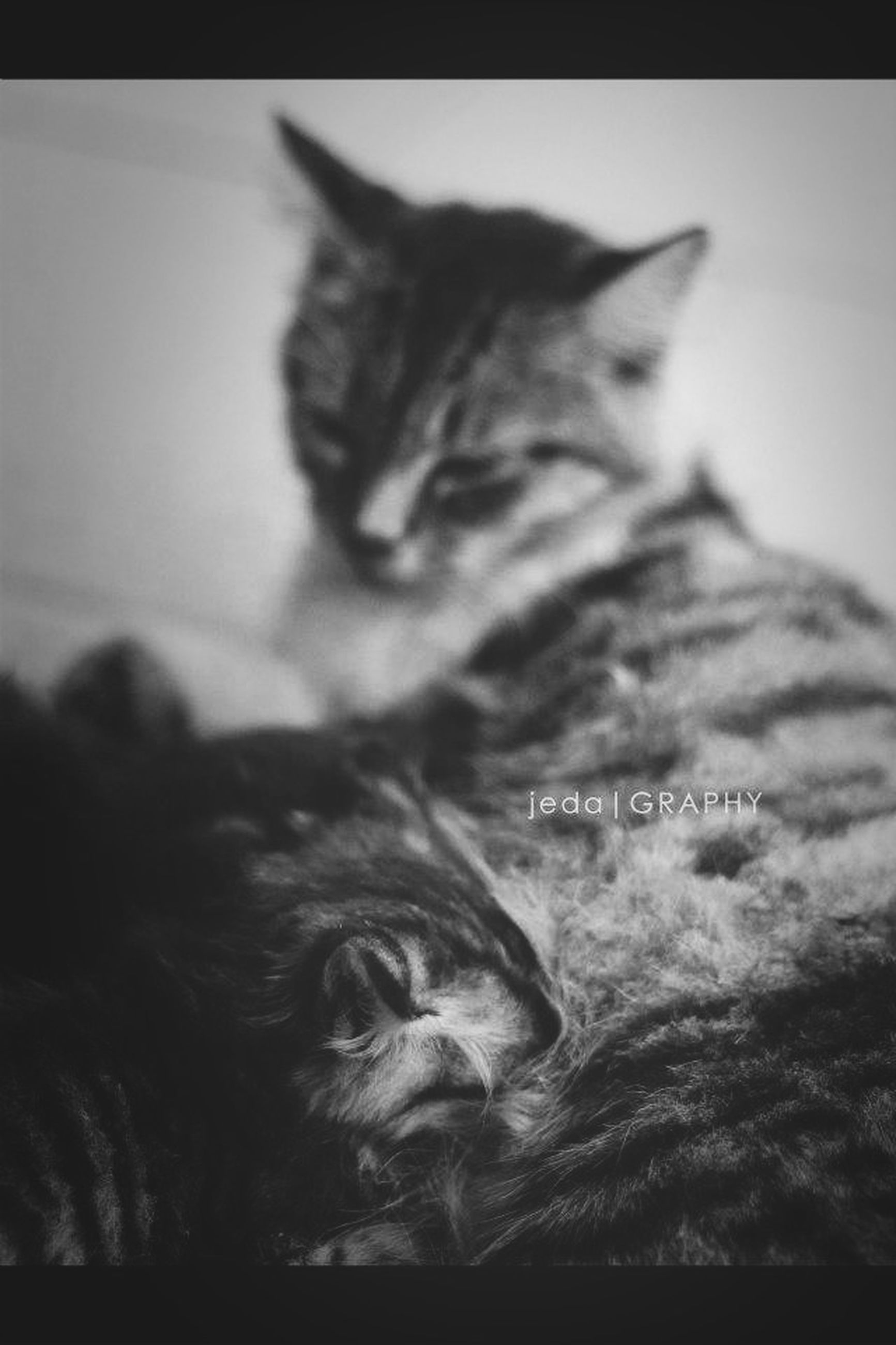 pets, domestic animals, one animal, animal themes, mammal, indoors, domestic cat, cat, dog, relaxation, close-up, feline, animal head, auto post production filter, transfer print, lying down, whisker, resting, selective focus, portrait