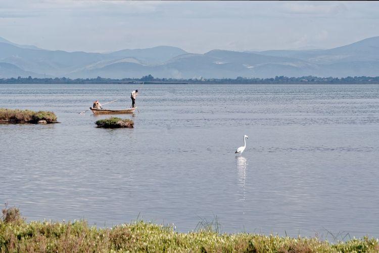 Swans on lake against sky