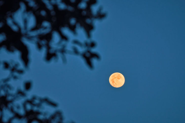 Low angle view of moon against blue sky at night