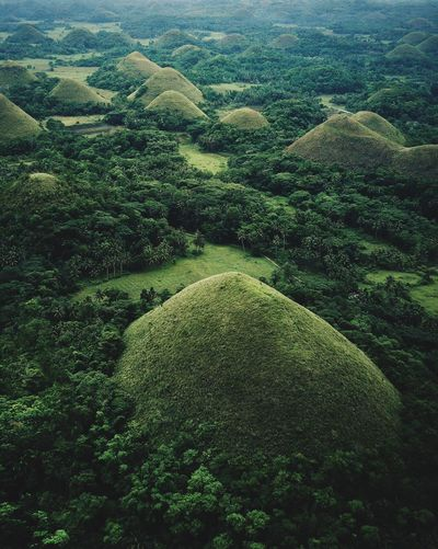 Chocolate hills from above Anotherplanet Droneoftheday Drone Landscape Green Color Lush Foliage Nature Tea Crop Outdoors Scenics