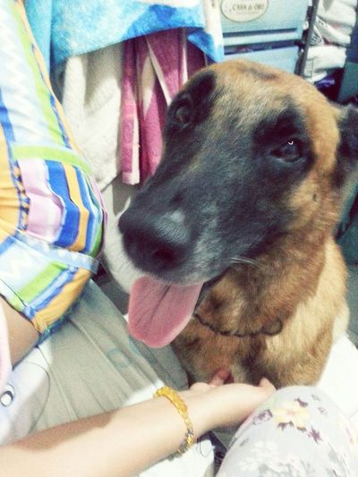 dog Family BelgianShepherd Adorable Dog First Eyeem Photo