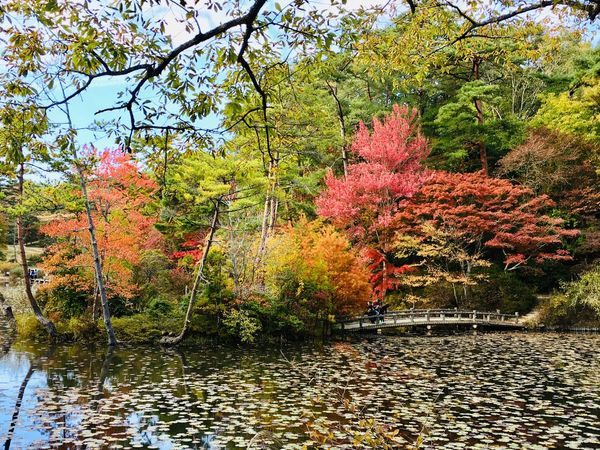 Autumn Plant Tree Growth No People Tranquility Water Park Red Sunlight Outdoors