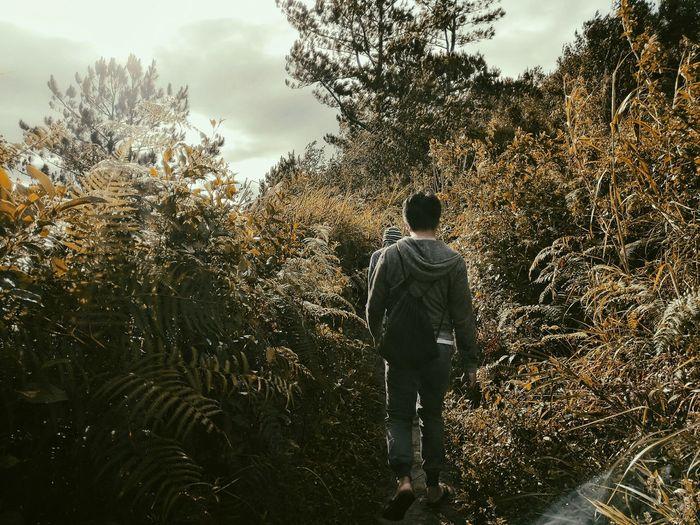 Rear View Of Man Walking On Field In Forest