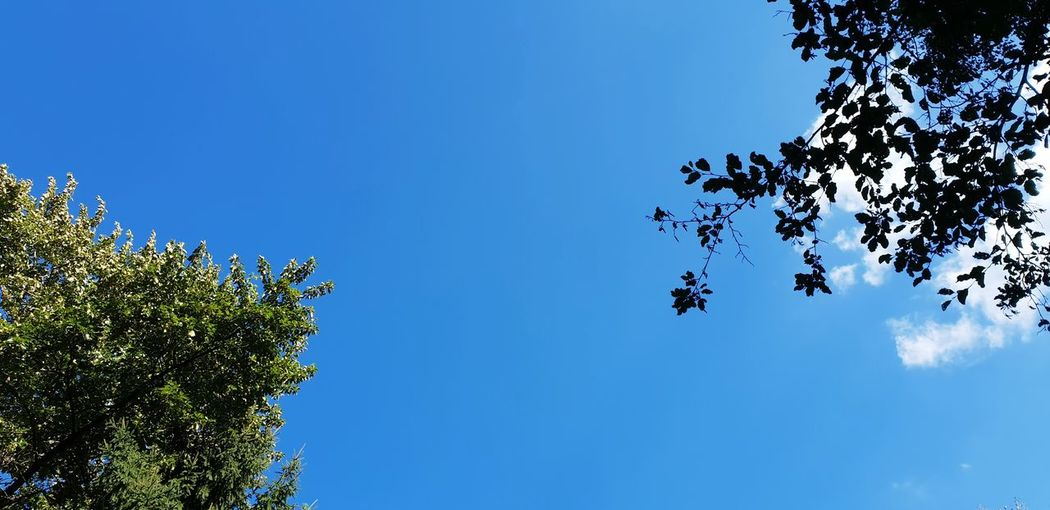 EyeEm Gallery Eyeemphotography Eye4photography  Trees And Sky Tree Blue Clear Sky Sky