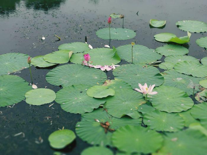 Water Flower Nature