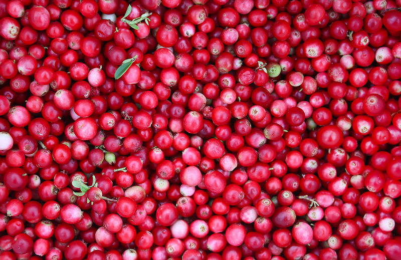 Abundance Agriculture Backgrounds Biology Branch Close-up Day Food Food And Drink Freshness Fruit Full Frame Growth Healthy Eating Large Group Of Objects Nature No People Outdoors Red Sour Taste Water