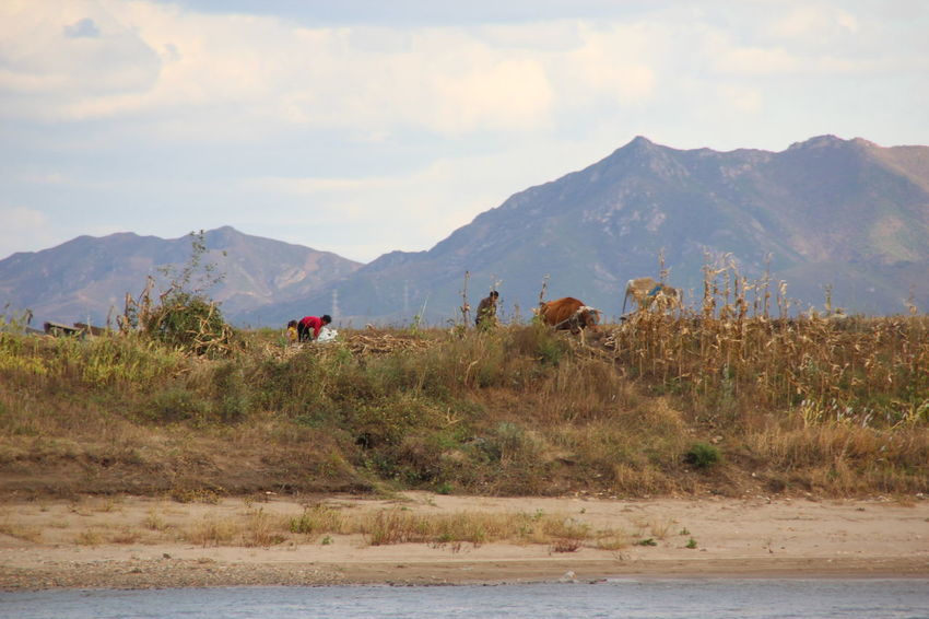 Fall Arduous Life Hard Times North Korea Crop  Corn Family Farm Life Countryside Mountain Mountain Range Nature People Outdoors Adult