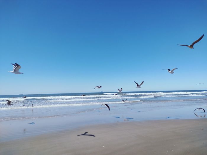 Seagulls flying over beach against sky