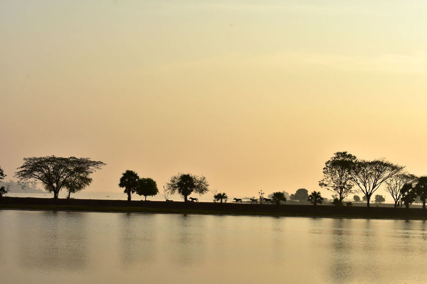 Morning Trees Beautiful Morning Lake View With Land Bridge And Horse Running Beauty In Nature Calm Lake Surface Day Horizon Horses On Landbridge Nature No People Outdoors Running Horses Scenics Silhouette Sky Sunset Tranquil Scene Tranquility Tree Tree Line Water