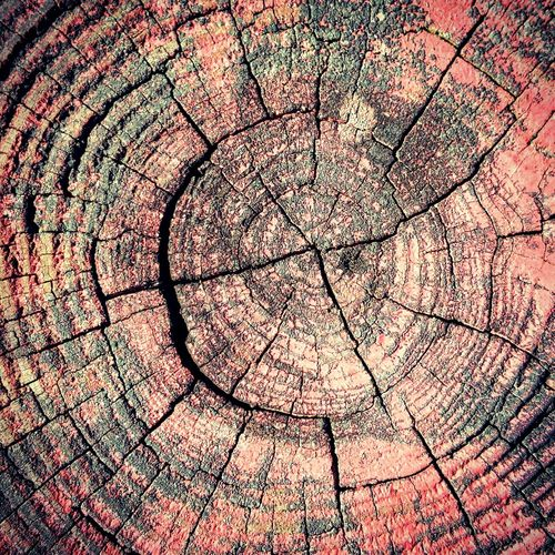 Wood is so good. Wood - Material Wood Weathered Red Paint Rings Decay Massparks Hugging A Tree Urban Nature Street Photography Natural Pattern Texture Minimalist Showcase: May EyeEm Nature Lover City Park Share Your Adventure My Hood Creation Fence