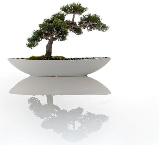Elegance Everywhere Bonsai Tree
