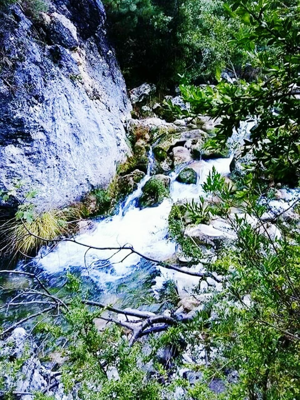 nature, rock - object, no people, day, outdoors, tree, water, tranquility, beauty in nature, forest, waterfall, scenics