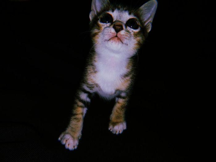 Portrait of cat on black background