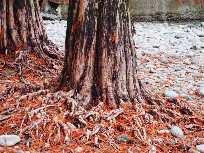 Tree Trunk Nature Close-up No People Outdoors Textured  Day Tree Tranquility Root Beauty In Nature Soil Water