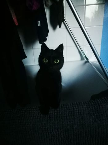 Pets Domestic Animals Domestic Cat One Animal Animal Themes Cat Looking At Camera Mammal Indoors  Feline Portrait Sitting Full Length Staring Front View Whisker Alertness Zoology Curiosity Animal Head  Wide Eyes Close-up Beauty In Nature Black Cat Photography Pet Portraits
