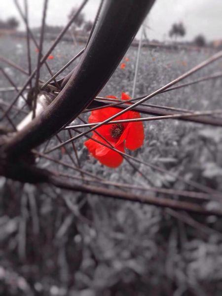 Flowers First Eyeem Photo Bike Black & White Rueda Prado On Your Bike