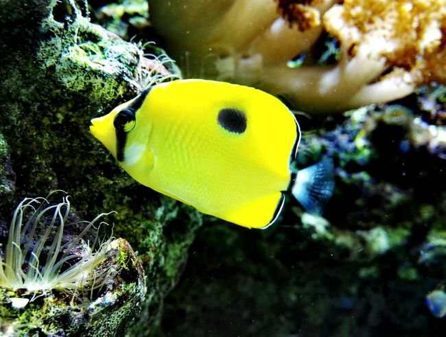 Underwater One Animal Animal Wildlife Sea Life Animals In The Wild UnderSea Yellow Multi Colored No People Full Length Close-up Animal Themes Day Nature Outdoors