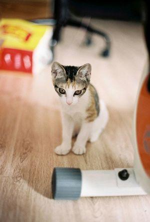 Bastet is growing :) Nikon Fm2 35mm Film Filmphotography Cat Mybastet