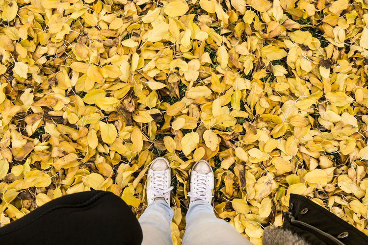 Carpet made of leaves Abundance Autumn Colors Backgrounds Close-up Day Freshness Gold Colored Human Body Part Human Leg Beauty In Nature Field Fragility Leaf Lifestyles Low Section Nature One Person Outdoors People Shoe Shoes Standing Tranquil Scene Tranquility Yellow