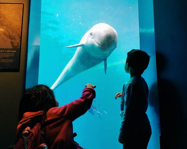 Children watching the beluga whale at the Vancouver aquarium. Animal Wildlife Aquarium Aquarium Photography Beluga Child Children Fish Looking Sea Life Underwater Vancouver Vancouver Aquarium Whale Whale Watching The Street Photographer The Street Photographer - 2017 EyeEm Awards