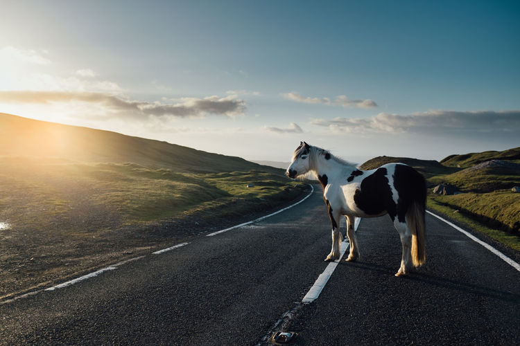 Horse Standing On Road Against Sky During Sunny Day